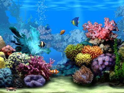 Пригода з перевезенням акваріуму